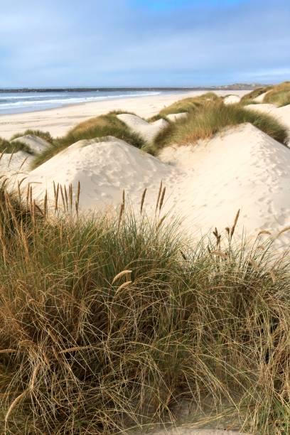 Pacific coastal sand dunes in the Oregon Dunes National Recreation Area