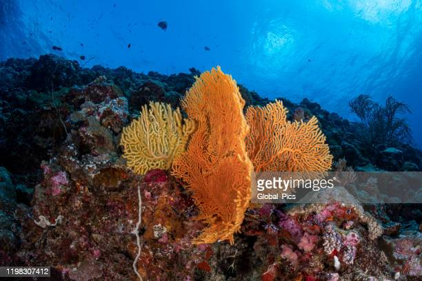 pacific coral reef - north pacific stock pictures, royalty-free photos & images