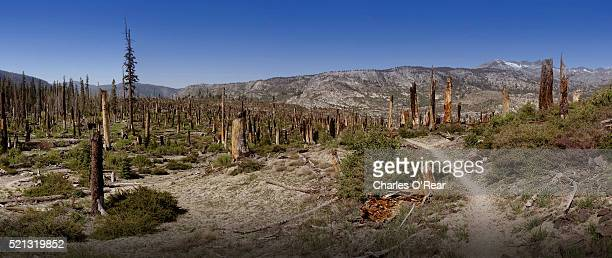 pacific crest trail in remains of 1992 fire - pacific crest trail stock pictures, royalty-free photos & images