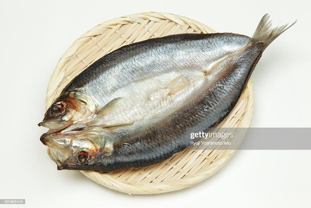 Pacific Herring : Stock Photo