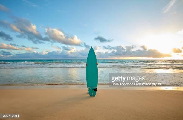 Pacific Islander woman standing on beach behind surfboard