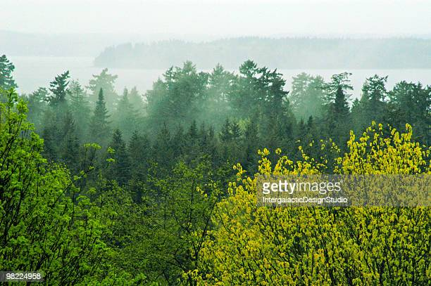 pacific northwest afternoon - washington state stock pictures, royalty-free photos & images