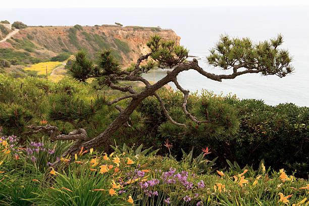 """""""Pacific Ocean Cliffs, View From Wayfarers Chapel"""""""