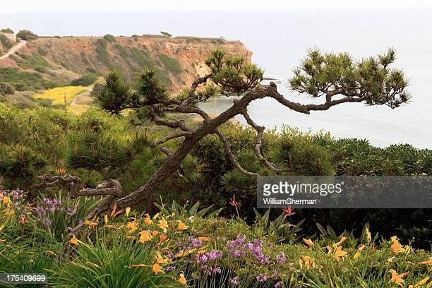 Pacific Ocean Cliffs, View From Wayfarers Chapel
