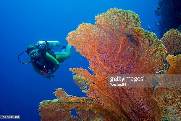 pacific ocean, palau, scuba diver in coral reef with giant fan coral - coral stock pictures, royalty-free photos & images