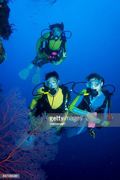 pacific ocean, palau, scuba divers at steep face - sea swimming stock photos and pictures
