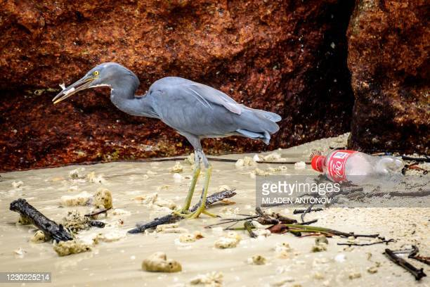 Pacific reef heron eats a fish amid rubbish, including a discarded plastic drink bottle, on a beach on Koh Lipe island in the Andaman Sea on December...