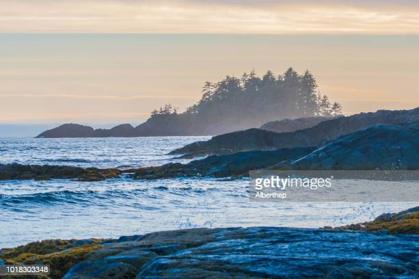 pacific rim national park - vancouver island stock pictures, royalty-free photos & images
