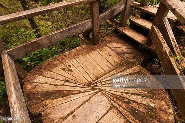 Pacific Rim National Park, Rainforest trail
