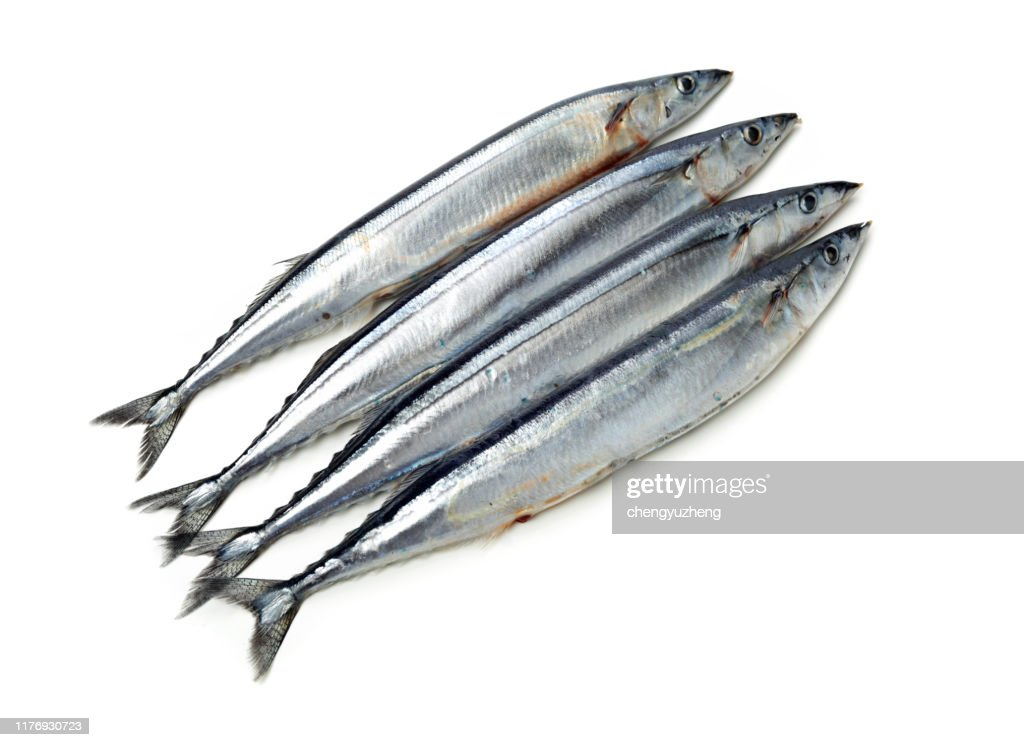 Pacific saury on white background : Stock Photo