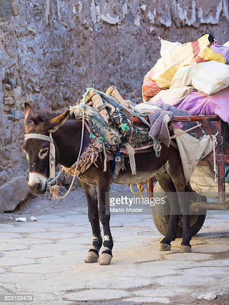 pack donkey with a laden cart in the medina, marrakech, marrakech-tensift-al haouz, morocco - animal powered vehicle stock photos and pictures