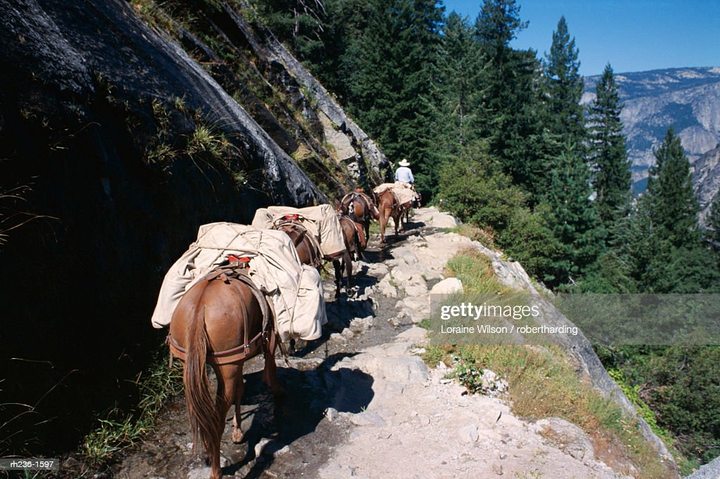 Pack horses and tourist trekking, Merced Valley, Yosemite National Park, UNESCO World Heritage Site, California, United States of America (U.S.A.), North America : Foto de stock