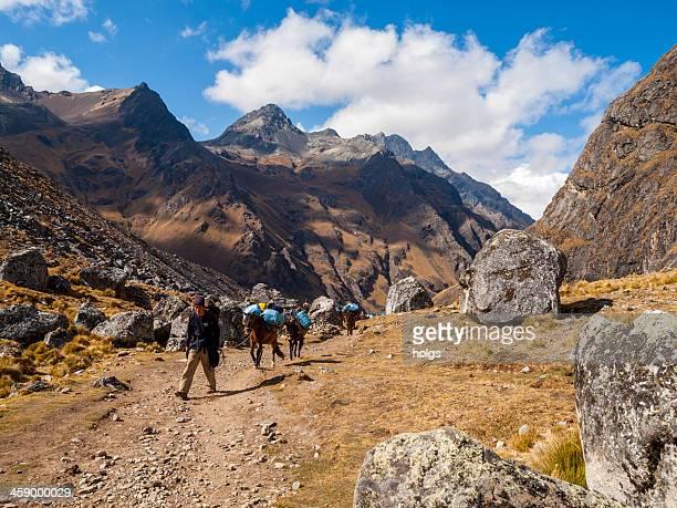 pack pferde auf der salcantay trail, peru - hügelkette stock-fotos und bilder