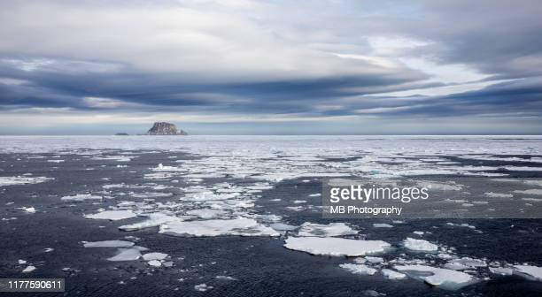 pack ice in svalbard - ice floe stock pictures, royalty-free photos & images