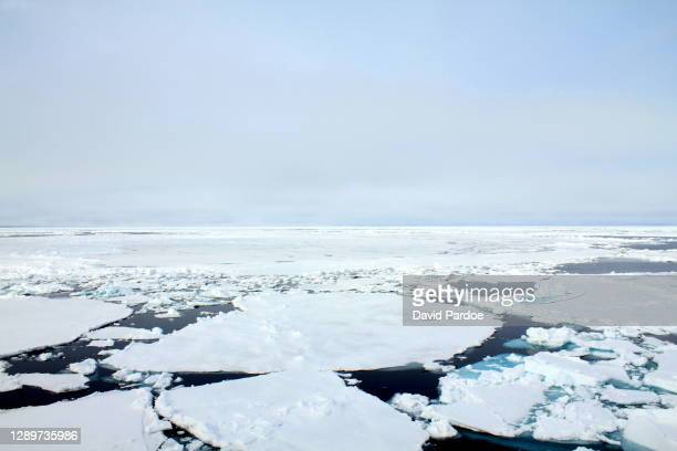 pack ice in svalbard - pack ice stock pictures, royalty-free photos & images