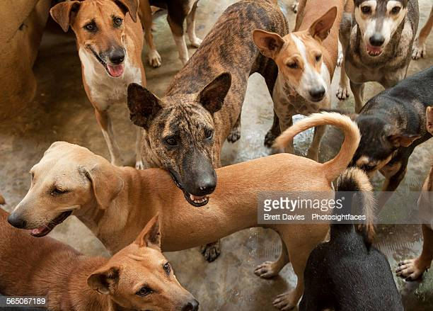 pack of dogs - pack of dogs stock pictures, royalty-free photos & images