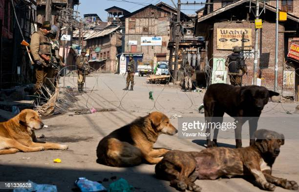 A pack of dogs rest on a main road as Indian paramilitary soldiers and policemen stand guard during a curfew on the second consecutive day after the...