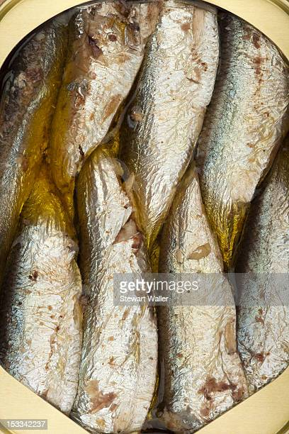 Packed sardines in a can