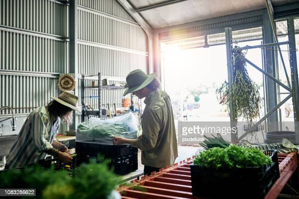 packing produce - agricultural occupation stock pictures, royalty-free photos & images