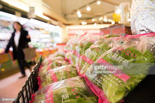 Packs of lettuce harvested from Panasonic Corp's plant factory are displayed for sale at a supermarket on November 30 2016 in Fukushima Japan One of...