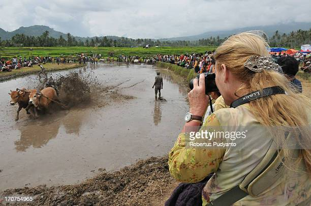 CONTENT] Pacu Jawi in Tanah Datar Western Sumatra Indonesia on January 12 2013 Foreign tourist photographed Pacu Jawi racing The annual Cow Race...