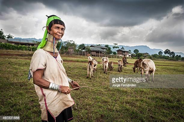 Padaung woman herding cattle.