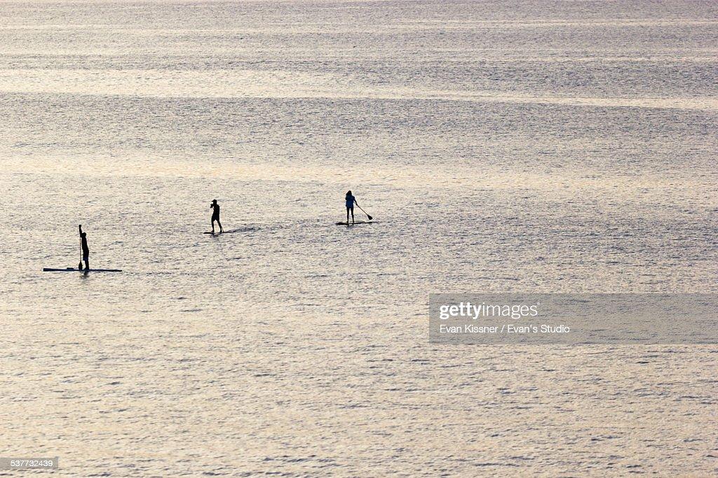 Paddle Race : Stock Photo