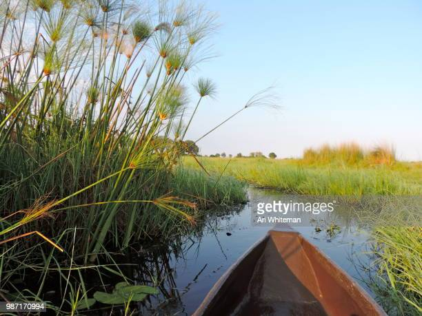 Paddle Through the Reeds