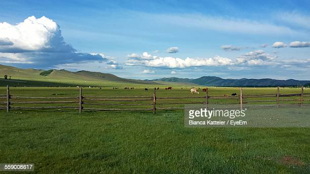 paddock and mountains on background - paddock stock photos and pictures