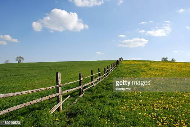 paddock - fence stock pictures, royalty-free photos & images