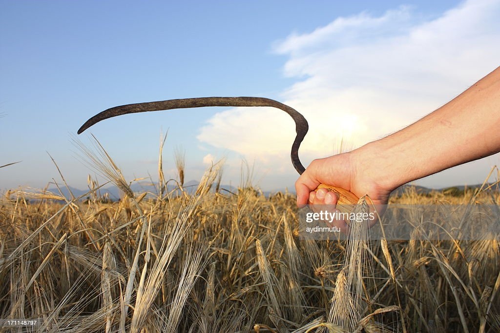60 Top Sickle Pictures, Photos, & Images - Getty Images