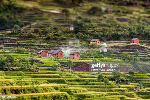 paddy field and village - antananarivo stock photos and pictures