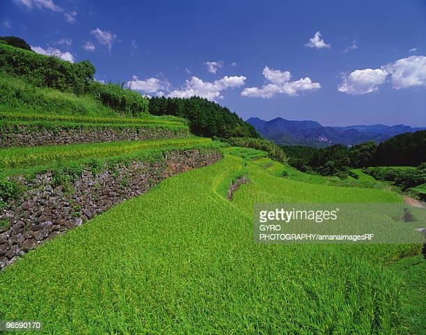 paddy field in saga prefecture, japan - 佐賀県 ストックフォトと画像