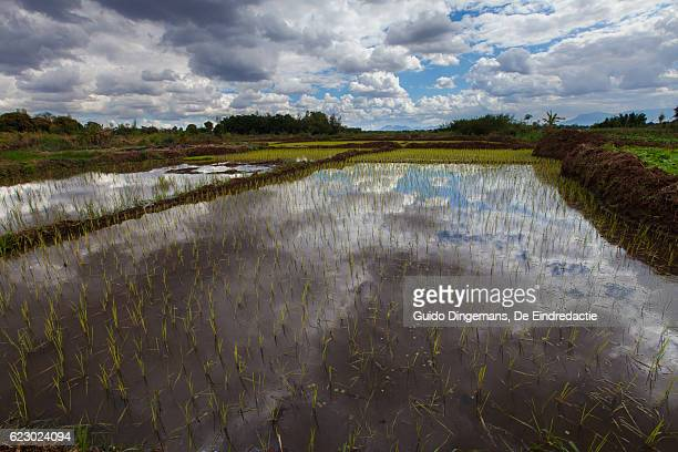 paddy field in southern malawi - un food and agriculture organization stock pictures, royalty-free photos & images