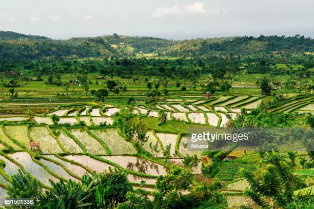 Reisfeld Reis Terrasse, Bali, Asien