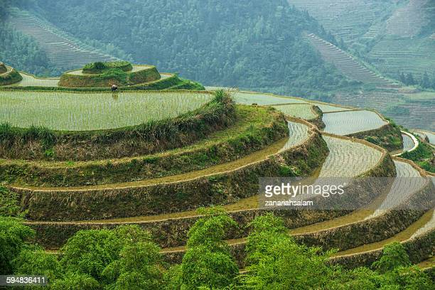 Paddy field terraces, Guilin, China