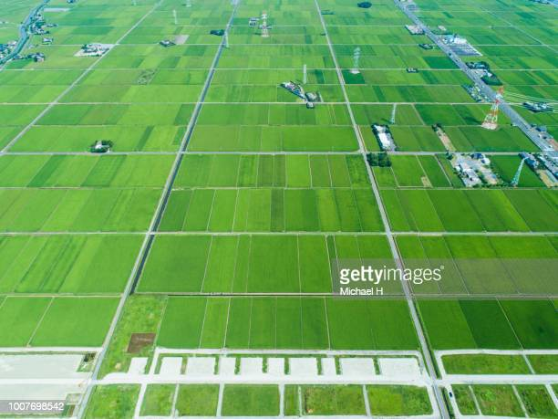 paddy fields and private houses on vast land - 水田 ストックフォトと画像