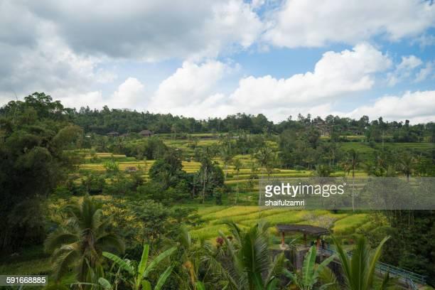 paddy fields in bali - shaifulzamri stockfoto's en -beelden