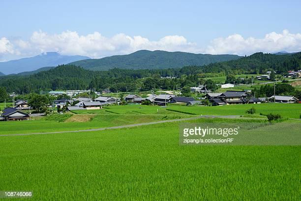 paddy fields - 岐阜県 ストックフォトと画像