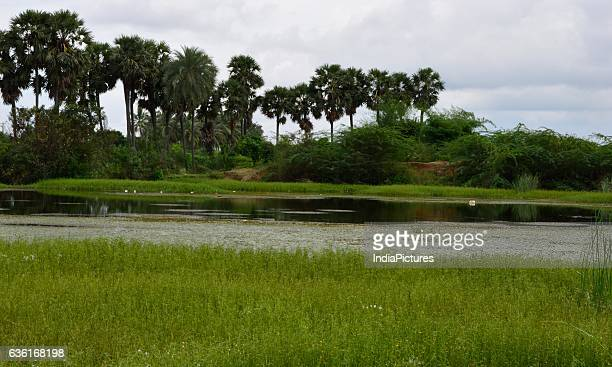 India Picture/UIG via Getty Images