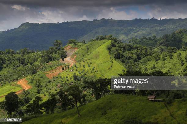 paddy harvesting on hills - bangladesh stock pictures, royalty-free photos & images