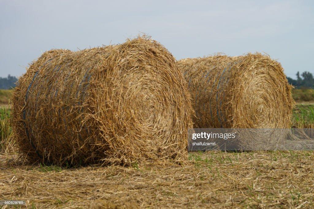 Paddy haystack : Stock Photo