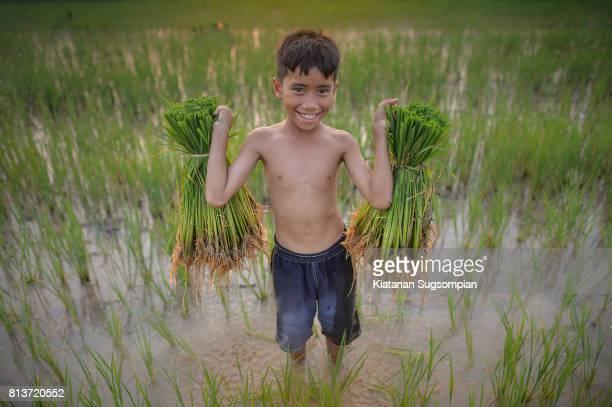 Paddy rice boy