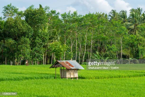 paddy rice field and small cottage hut at ubud, bali, indonesia. - shaifulzamri eyeem stock pictures, royalty-free photos & images