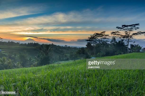 Paddy Reis Feld Sonnenaufgang in Bali mit Vulkan im Hintergrund