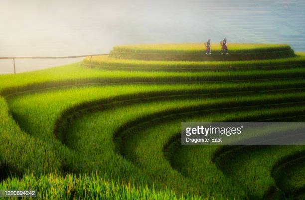 paddy rice terraces in countryside area of mu cang chai, yen bai, mountain hills valley in vietnam. - mù cang chải stock pictures, royalty-free photos & images