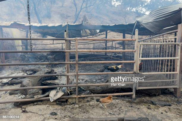 Padilla Ranch on Little Tujunga Road where 29 horses perished in Creek Fire yesterday on December 6 2017 in Sylmar California