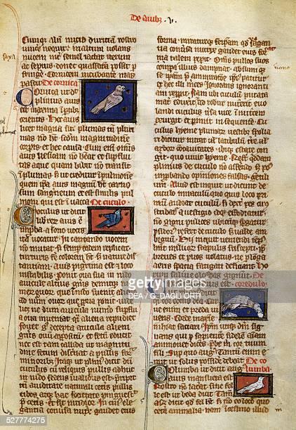 Page from De Natura Rerum on birds by Albertus Magnus 13th century manuscript Germany 13th century Valenciennes Bibliothèque Municipale De...