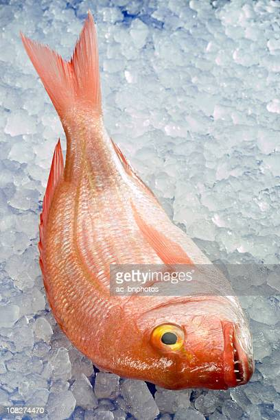 pagellus erythrinus - redfish stock photos and pictures
