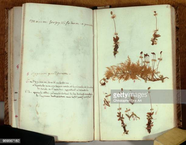 Pages from the herbarium of JeanJacques Rousseau handwritten annotations Museum of Decorative Arts in Paris France